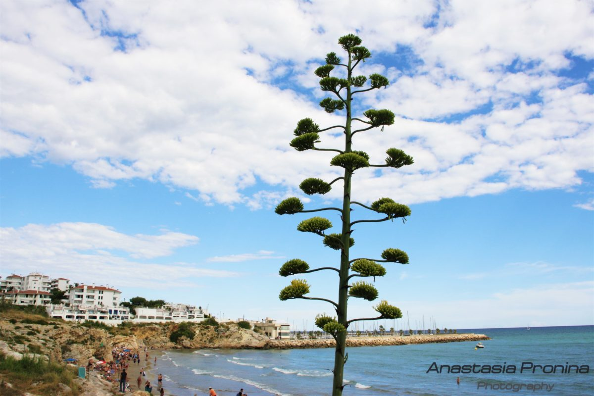 Picture Sitges Spain