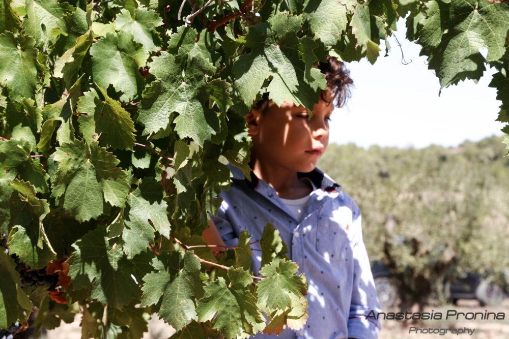 Прогулки среди виноградников
